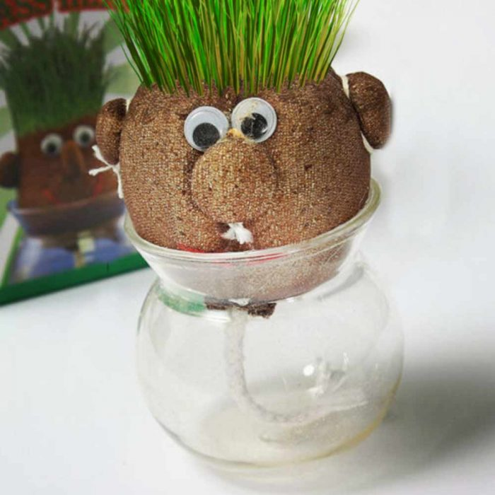 Planter et faire pousser une tete à herbe